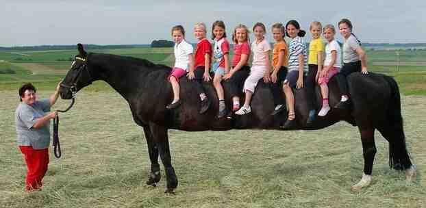 Pourquoi dit-on chevaux?