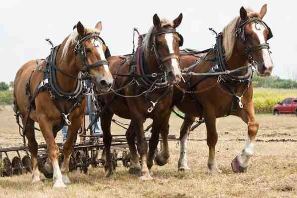 Quels sont les chevaux dans la voiture?