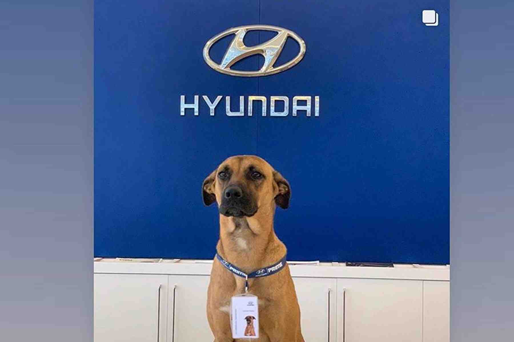 Qui fabrique Hyundai?